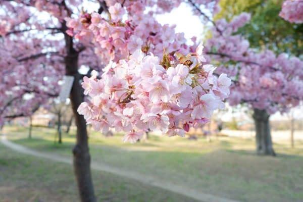 okn-jp-03-17-43