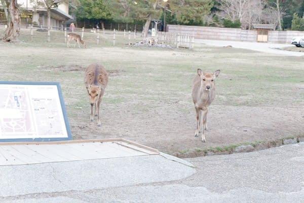 okn-jp-03-17-46